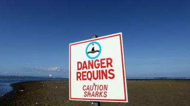 Des restes humains retrouvés dans l'estomac d'un requin à La Réunion