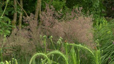 Zoom sur une graminée Calamagrostis x acutiflora 'Overdam'