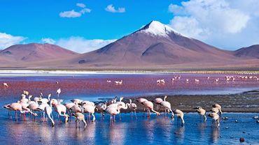 A la rencontre des flamants rose du désert de sel d'Atacama