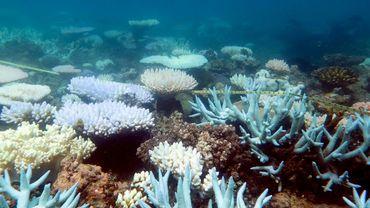 Photo non datée des coraux de la Grande Barrière en Australie, diffusée le 19 avril 2018 par le Centre d'excellence ARC pour les études sur les récifs coralliens de l'Université James Cook
