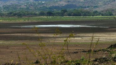 Des coquillages asséchés qui émergent du sol craquelé par le soleil : c'est tout ce qui reste de la lagune d'Atescatempa au Guatemala, autrefois vaste plan d'eau turquoise, victime du changement climatique.