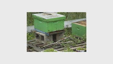 Les apiculteurs s'inquiètent de l'augmentation du taux de mortalité de leurs abeilles