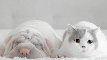 Le bicarbonate de soude, le soin préventif pour nos animaux de compagnie