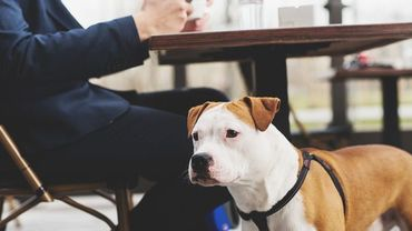 """Les chiens sont les bienvenus dans les """"restaurant dogs friendly"""""""