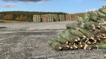La coupe des sapins bat son plein