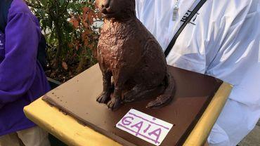 Ce jeudi matin, Gaia a remis à la secrétaire d'État bruxelloise en charge du Bien-être animal, la CD&V Bianca Debaets, un chat en chocolat, grandeur nature.