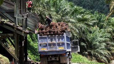 La culture extensive de l'huile de palme dans le monde pose de gros problèmes de déforestation et certains exploitants ne respectent pas les principes directoires mis en place au niveau de l'OCDE. C'est le cas notamment de la société luxembourgeoise d'origine belge Socfin. Elle vient d'être épinglée par le point de contact national de l'OCDE en Belgique.