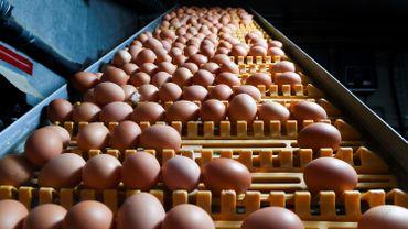 Ces œufs seront détruits. Ils n'ont pas atteint le circuit commercial et n'ont donc jamais été une menace pour les consommateurs. Les autorités espagnoles vont poursuivre leurs investigations.