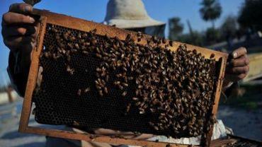Un réseau de trafic de miel chinois démantelé