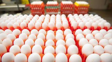 L'Afsca communique les codes d'oeufs à ne pas consommer et à ramener