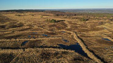 Clôture du projet LIFE Ardennes Liégeoises : de nombreux habitats restaurés.