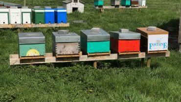 Dès que les températures remontent, les abeilles s'activent