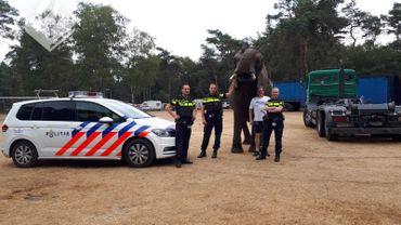 """Appel étonnant aux Pays-Bas: """"Allo, police? J'ai un éléphant dans mon jardin!"""""""
