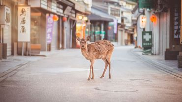 Les animaux reviennent dans les villes désertées par l'homme