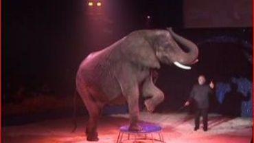 Jenny, l'éléphante de Bouglione