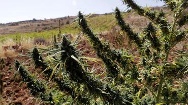 Grèce: 1,6 tonne de cannabis albanais saisie après une chasse en mer