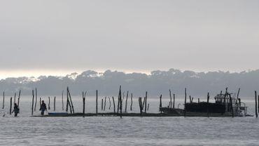 Elevage d'huîtres dans le bassin d'Arcachon.