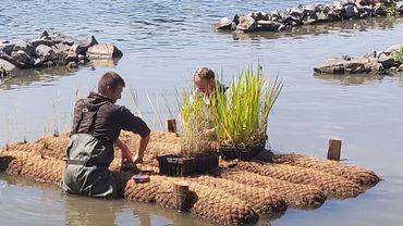 Création d'une frayère pour rempoissonner naturellement la Meuse du côté de Flémalle
