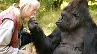 La gorille Koko, et sa professeure le Dr. Penny Patterson(Photo fournie par The Gorilla Foundation)