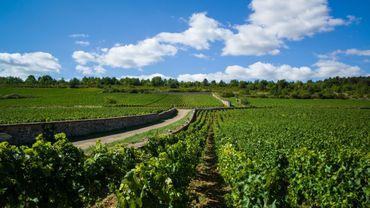"""Vin: la Bourgogne attend un millésime """"exceptionnel"""""""