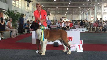 Environ 12 000 chiens étaient présents ce week-end pour l'édition 2016 de l'European Dog Show.
