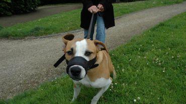 Tenir son chien en laisse n'est pas une entrave à sa liberté