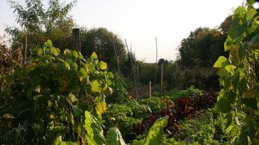 A Vielsalm, les autorités ont présenté plusieurs projets pour une commune plus durable.
