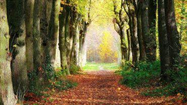 Ottignies-Louvain-la-Neuve possède trois bois, totalisant 15 hectares.