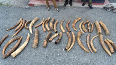 Belgique: plaque tournante du trafic d'ivoire?