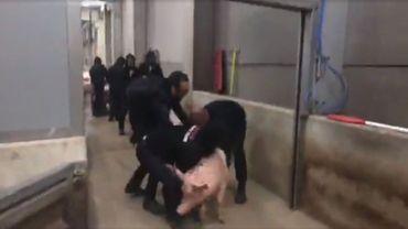 Activites antispécistes à l'abattoir de Tielt: le ministre Weyts les accuse de maltraitance animale