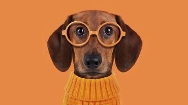 Quels sont les noms de chiens les plus populaires en Belgique?