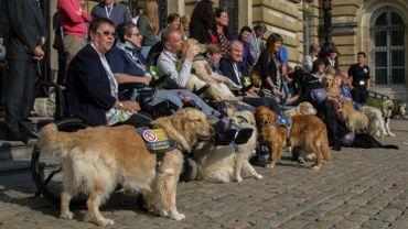 L'accès des chiens d'assistance aux lieux publics a fait objet d'une journée d'information et de débat au Sénat.