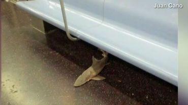 Un requin retrouvé dans le métro