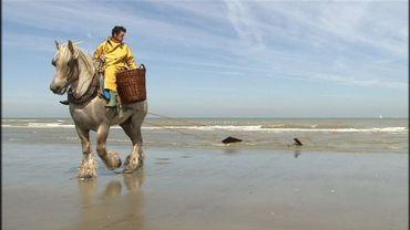 Une deuxième femme parmi les pêcheurs aux crevettes à cheval d'Oostduinkerke