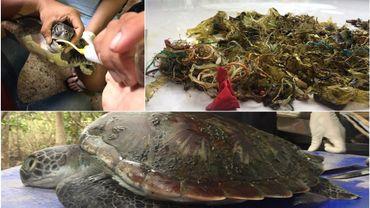 Voilà en haut à droite ce qu'on a retrouvé dans la tortue, que les soigneurs ont tenté en vain de sauver...