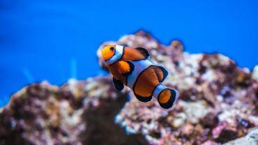 Philippine a testé le métier de soigneur aux aquariums de Pairi Daiza