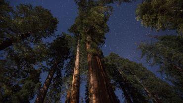 Un séquoia géant peut absorber jusqu'à 250 tonnes de CO2.