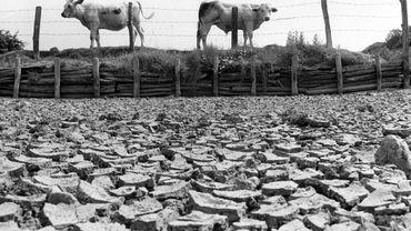 Eté 1976:  une époque difficile pour l'agriculture.