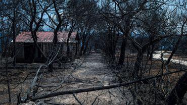 Incendies en Grèce: le bilan de l'incendie en Attique porté à 93 morts