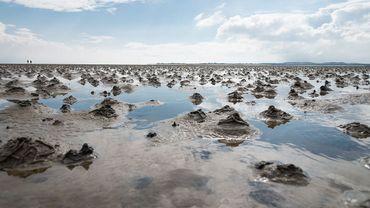 Un retour des huîtres en mer du Nord pour faire renaître sa biodiversité