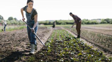 A la ferme, pas de confinement pour les agricultrices