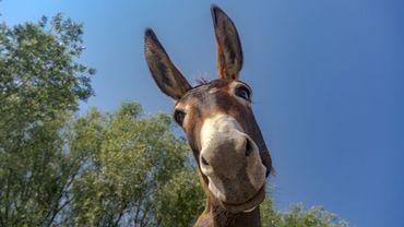 Anim'Anerie, l'ASBL qui protège les ânes et aide les personnes moins valides, implantée sur les hauteurs de Herstal, met en vente en ligne ses produits à base de lait d'ânesse