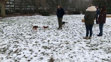 Molenbeek et Bruxelles-Environnement se sont associés pour créer un espace où les chiens pourront courir librement, sous la surveillance de leur maître.