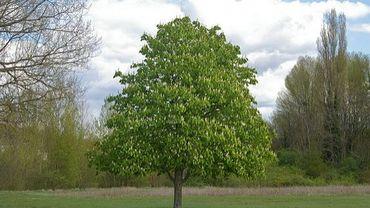 Une foire de Libramont sur le thème de l'arbre.