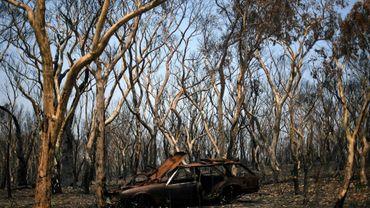 Un véhicule et des arbres calcinés à Lithgow, le 11 janvier 2020 en Australie