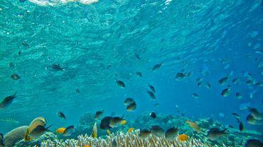 Microparticules de plastique dans nos rivières et océans, la nouvelle inquiétude environnementale