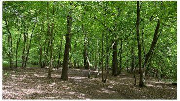 Les Arbres du souvenir: une forêt comme lieu de mémoire pour les défunts
