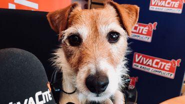 Le chien le plus intelligent de Belgique dans le studio de VivaCité