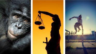 Le grand singe, le contentieux stratégique et le pouvoir d'agir