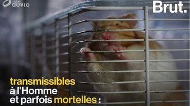 Quelles sont les maladies que nos animaux de compagnie peuvent nous transmettre ?
